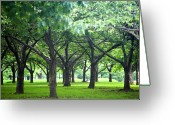 Corona Greeting Cards - Low Trees In Flushing Meadows-corona Park Greeting Card by Ryan McVay