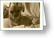 Puppies Greeting Cards - Loyalty At Its Best Greeting Card by Amanda Vouglas