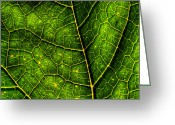 Backlit Greeting Cards - Luminescent Leaf Greeting Card by Matt Dobson