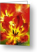 Tulip Art Botanical Art Mixed Media Greeting Cards - Luminosity Of Nature Greeting Card by Zeana Romanovna