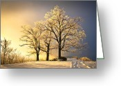 Oak Trees Greeting Cards - Luminous - Blue Ridge Winter Sunset Greeting Card by Dave Allen