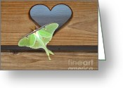 Dandelion Pyrography Greeting Cards - Luna Moth in Love Greeting Card by The Kepharts