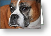 Dog Prints Photo Greeting Cards - Luna the Boxer 01 Greeting Card by John Knapko