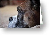Dog Prints Photo Greeting Cards - Luna the Boxer 02 Greeting Card by John Knapko