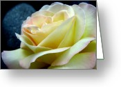 Wedding Flowers Ideas Greeting Cards - Lunar Rose Greeting Card by Louie Rochon