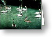 Seabirds Digital Art Greeting Cards - Lunch Crowd Greeting Card by Ellen Lacey