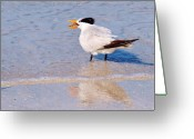Tern Greeting Cards - Lunch Time Greeting Card by E Luiza Picciano