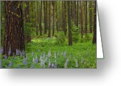 Lupine Greeting Cards - Lupine Carpet Greeting Card by Mike  Dawson