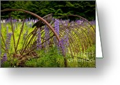 Grafton County Greeting Cards - Lupine Pasture Greeting Card by Susan Cole Kelly