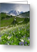 Lupine Greeting Cards - Lupine Storm Greeting Card by Mike  Dawson