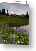 Cascade Greeting Cards - Lupine Sunrise Greeting Card by Mike  Dawson
