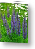 Fine Art Flower Photography Greeting Cards - Lupines Greeting Card by Juergen Roth