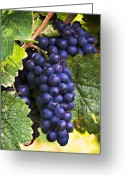 Luscious Greeting Cards - Luscious Grape Cluster Greeting Card by Marion McCristall