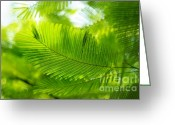 Tree. Acacia Greeting Cards - Luscious Green Light. Acacia Tree Greeting Card by Jenny Rainbow