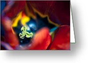 Luscious Greeting Cards - Luscious Kaleidoscope Greeting Card by Wenata Babkowski