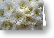 Cultivars Greeting Cards - Luscious White Chrysanthemum  Greeting Card by Debra  Miller