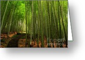 Shoot Greeting Cards - Lush Bamboo Forest Greeting Card by Yali Shi
