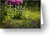 Flowerbed Greeting Cards - Lush blooming garden  Greeting Card by Elena Elisseeva