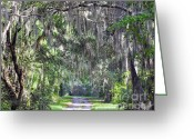 Country Lane Greeting Cards - Lush Lane Greeting Card by Al Powell Photography USA