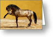 Buckskin Horse Greeting Cards - Lusitano Stallion Greeting Card by Carol Walker