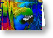 Rainbows Greeting Cards - Macaw Madess Greeting Card by Amanda Vouglas