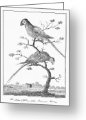 Ara Ararauna Greeting Cards - Macaws, 1796 Greeting Card by Granger