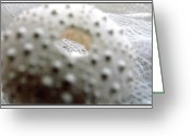 Beach Decor Digital Art Greeting Cards - Macro and Close Ups Study 1  Sea Urchin Greeting Card by Danielle  Parent