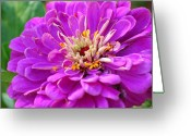 Macro Greeting Cards - Macro Mum Greeting Card by Kimberly Gonzales