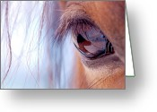 Brown Eyes Greeting Cards - Macro Of Horse Eye Greeting Card by Anne Louise MacDonald of Hug a Horse Farm