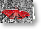 Antheraea Polyphemus Greeting Cards - Madam Moth - Red White and Black Greeting Card by Al Powell Photography USA