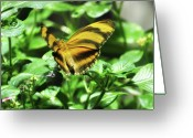 Madame Butterfly Greeting Cards - Madame Butterfly Greeting Card by Bill Cannon
