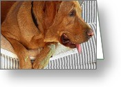 Diane Berry Digital Art Greeting Cards - Maddie Greeting Card by Diane E Berry