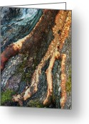 Joann Skywatcher Greeting Cards - Madrone Fingers Greeting Card by JoAnn SkyWatcher