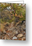 "\""guadalupe National Park\\\"" Greeting Cards - Madrone Tree - Guadalupe Mountains Greeting Card by Stephen  Vecchiotti"