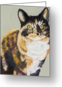 Calico Cat Greeting Cards - Maggie Mae Greeting Card by Pat Saunders-White