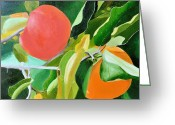 Persimmons Greeting Cards - Maggies Persimmons Greeting Card by Tom Amiss