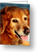 Brown Eyes Greeting Cards - Maggies Smile Greeting Card by Karen Wiles
