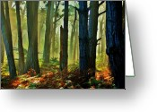 Forest Floor Greeting Cards - Magic Forest Greeting Card by Helen Carson