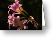 Larry Walker Greeting Cards - Magic Lily Appears Greeting Card by J Larry Walker