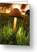 Science Fiction Pyrography Greeting Cards - Magic Mushroom Greeting Card by Jack Edjourian
