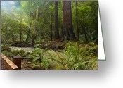 Rain Forrest Greeting Cards - Magic Redwood Scene Greeting Card by Mark Gilmore