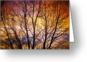Sunset Posters Greeting Cards - Magical Colorful Sunset Tree Silhouette Greeting Card by James Bo Insogna