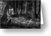 Black And White Greeting Cards - Magical Forest Greeting Card by Scott Norris
