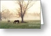Scott Greeting Cards - Magical Morning Greeting Card by Scott Pellegrin