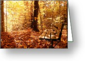 Autumn In The Country Photo Greeting Cards - Magical Sunbeams on the Best Seat in the Forest Greeting Card by Chantal PhotoPix
