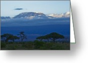 African Mountain Greeting Cards - Magnificent Kilimanjaro Greeting Card by Michele Burgess