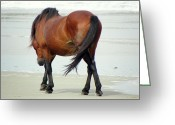 Bay Horse Greeting Card Greeting Cards - Magnificent Wild Stallion  Greeting Card by Kim Galluzzo-Wozniak