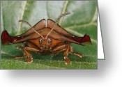 Beetles Greeting Cards - Magnified Close-up Of A Rust-colored Greeting Card by Paul Zahl