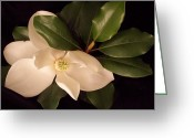 Background Greeting Cards - Magnolia 2 Greeting Card by Darice Machel McGuire