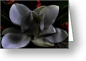 Flower Blossom Greeting Cards - Magnolia Blossom  Greeting Card by David Patterson